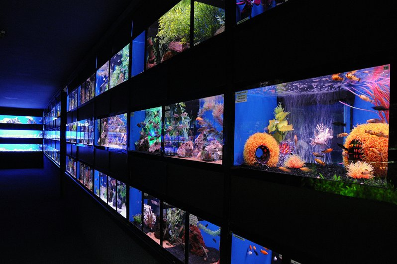 Abyss Aquatic Warehouse Stockport - 360 Spin Google Business
